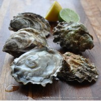 Fal Wild Pacific Oysters (S-XXL)