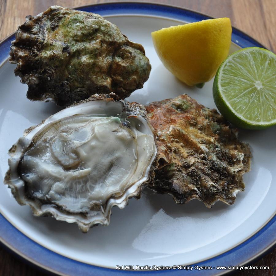 Fal Oysters & Shellfish Selection Box