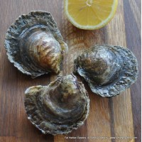 Fal Native Oysters (S-L)
