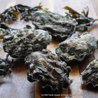 Fal Wild Pacific Oysters (S-XXXL)