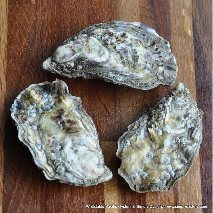 Whitstable Pacific Oysters (S-L)