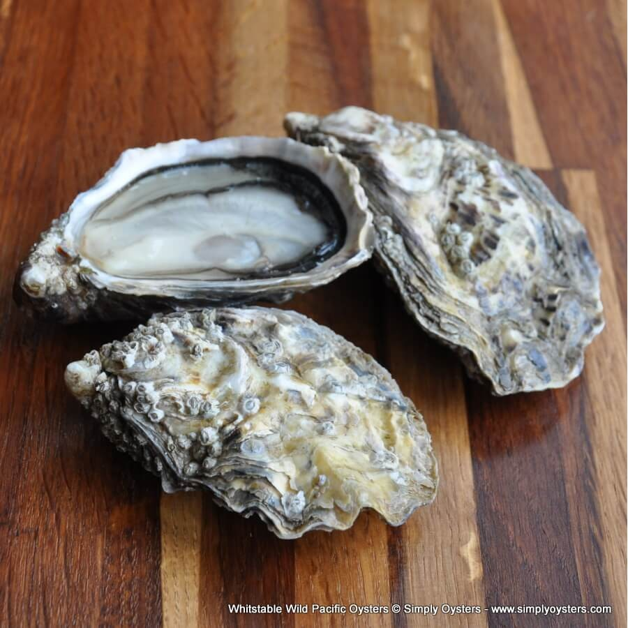 Whitstable Wild Pacific Oysters (S-L)