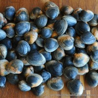 Poole Cockles