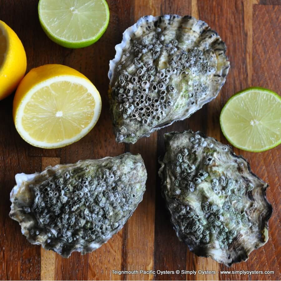 Teignmouth Pacific Oysters (M-L)