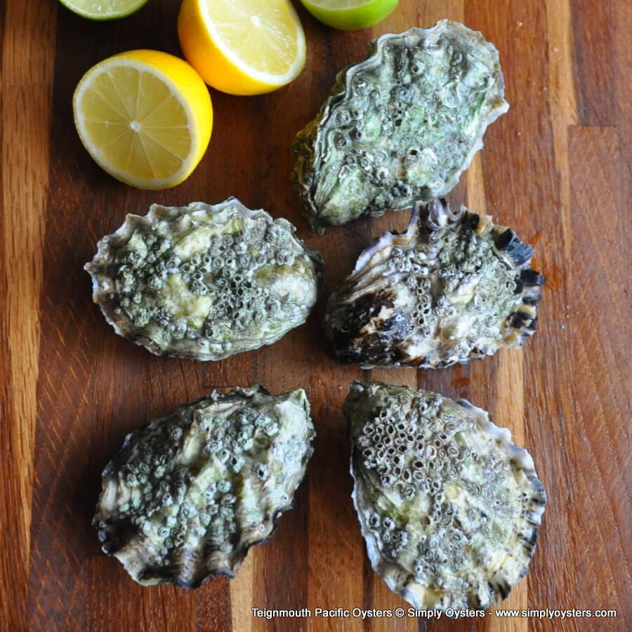 Teignmouth Oysters & Shellfish Selection Box