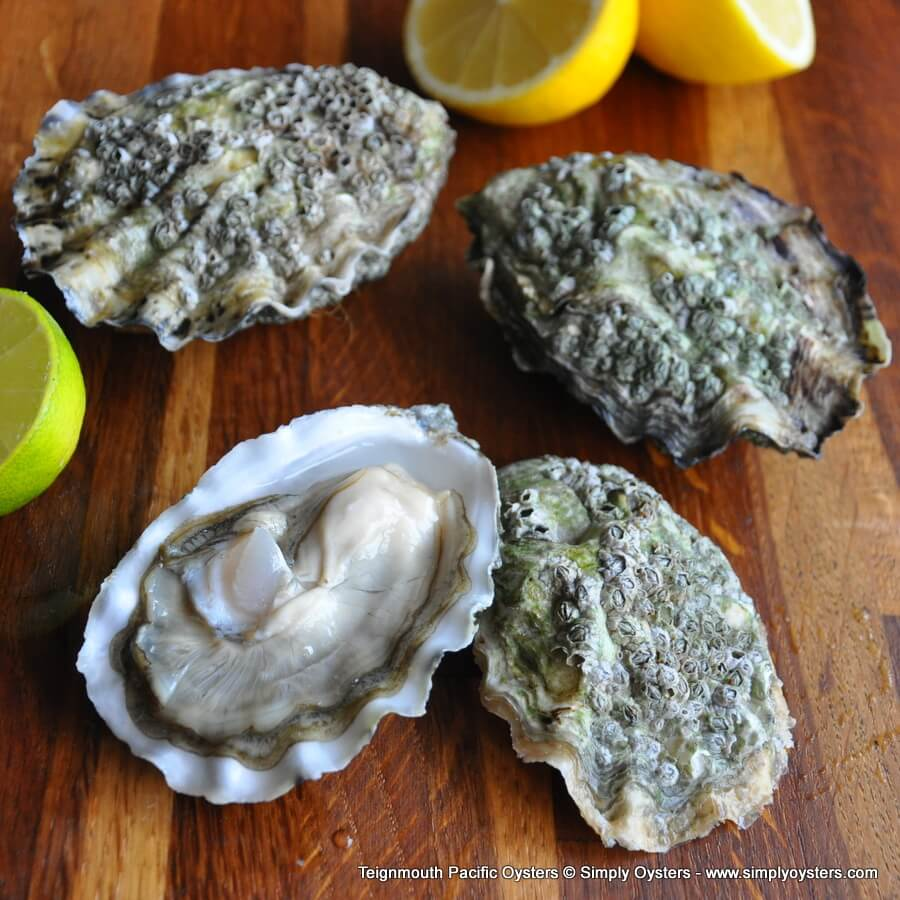 Teignmouth Wild Pacific Oysters (M-L)