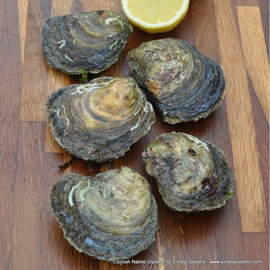 Cornish Native Oysters (S-L)