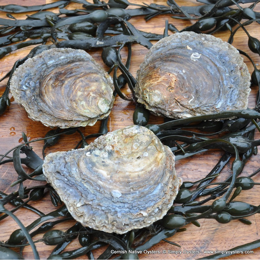 Cornish Native Oysters (M-L)