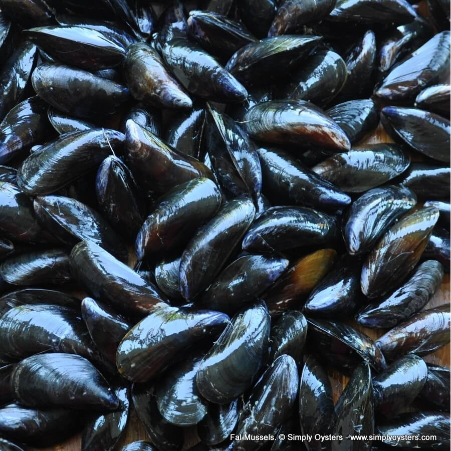 Fal Mussels