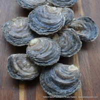 Helford Native Oysters (S-L)