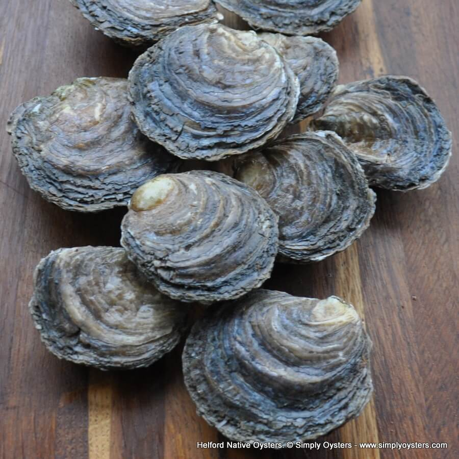 Helford Native Oysters (M-L)
