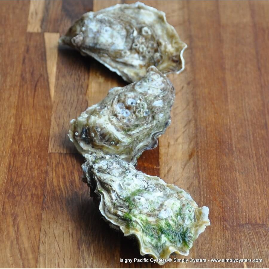 Isigny Pacific Oysters (M)