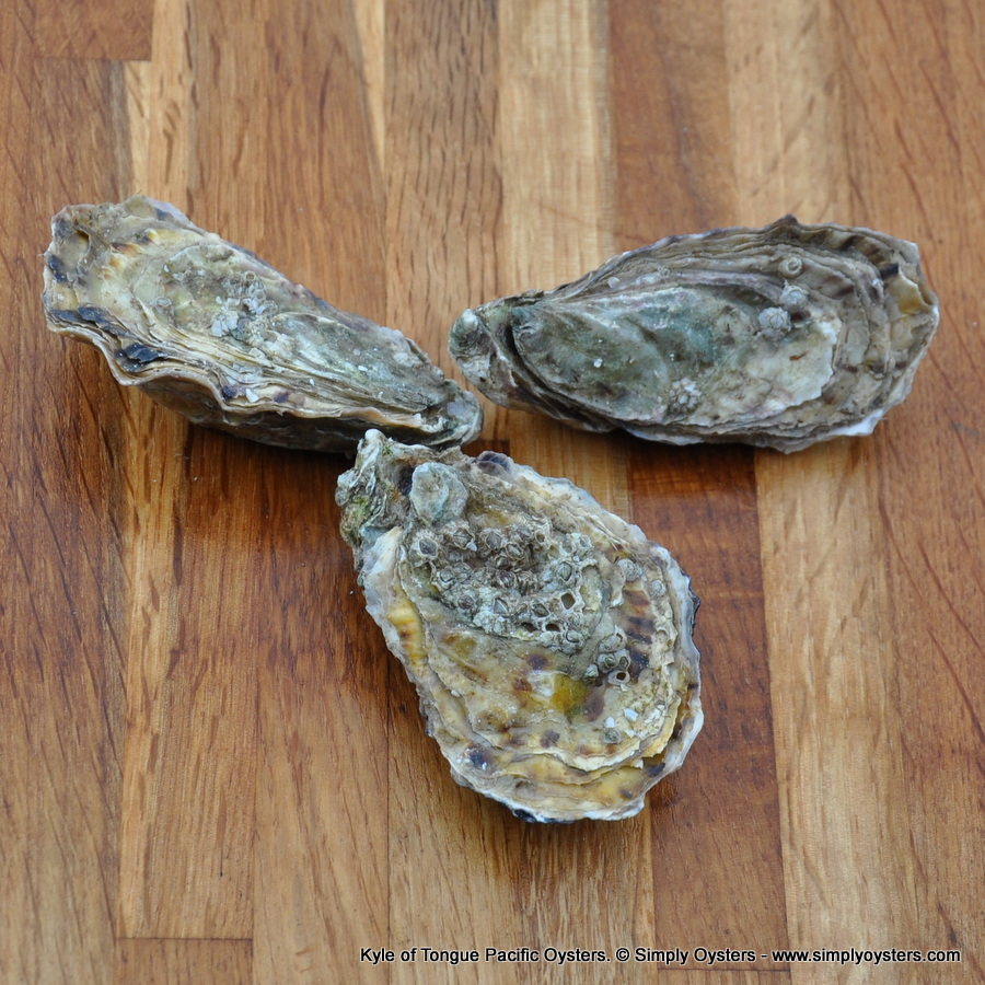 Kyle of Tongue Pacific Oysters (M)