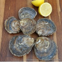 Loch Ryan Native Oysters (L)