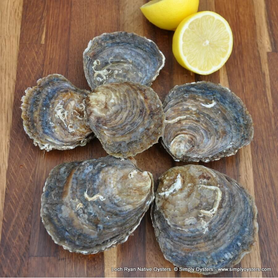 Loch Ryan Native Oysters (M-L)
