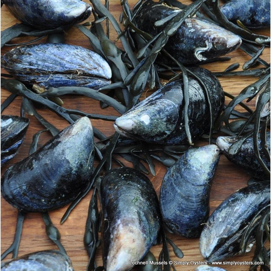 Lochnell Mussels