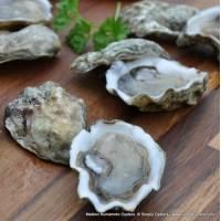 Maldon Kumamoto Oysters (XS)