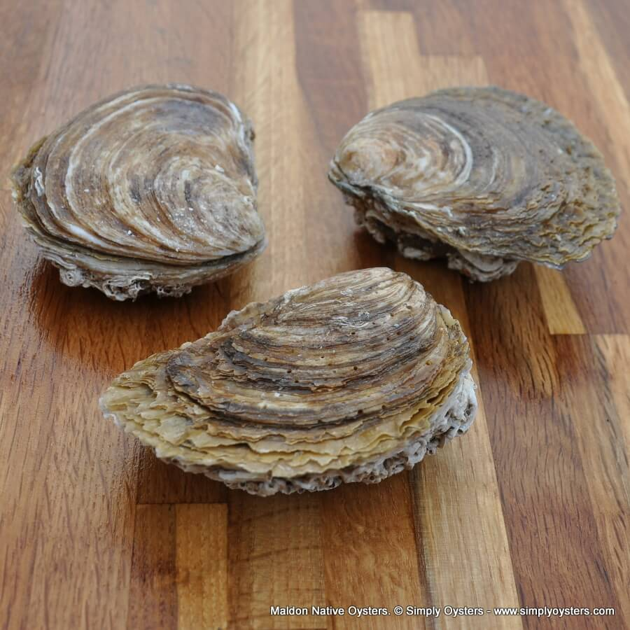 Maldon Native Oysters (XL)