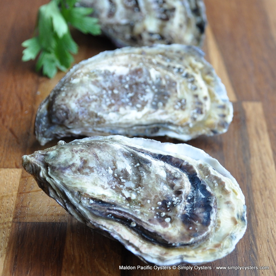 Maldon Pacific Oysters (S-L)