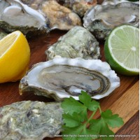 Oyster Subscription Box