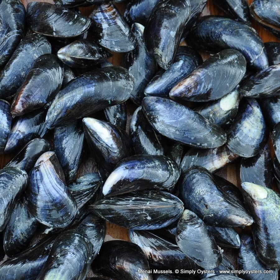Menai Mussels
