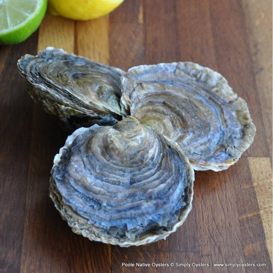 Poole Native Oysters (S-XL)