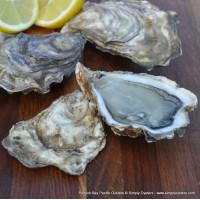 Porlock Bay Pacific Oysters (M)