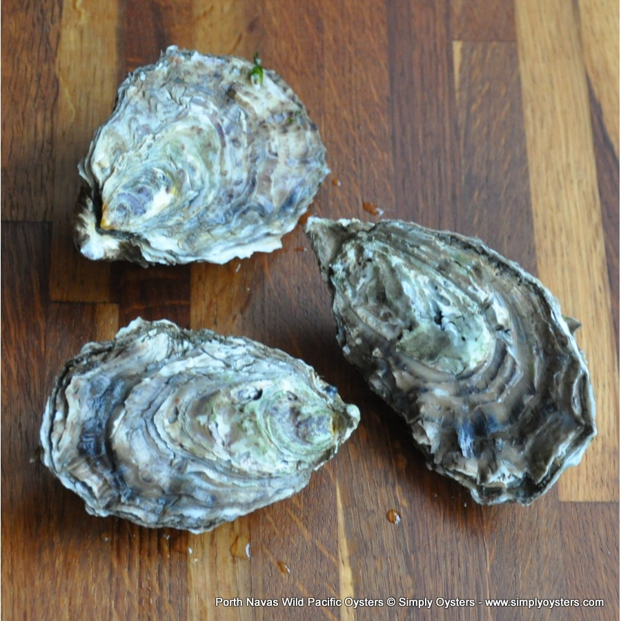 Port Navas Wild Pacific Oysters (L-XL)