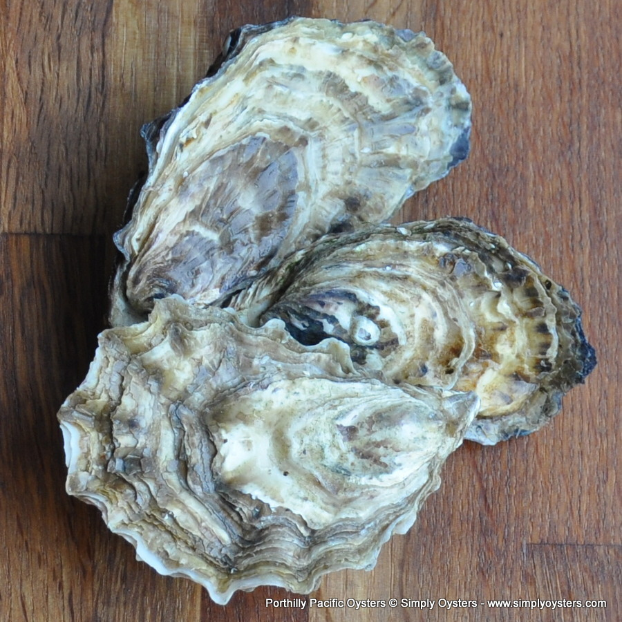 Porthilly Pacific Oysters (XS-L)