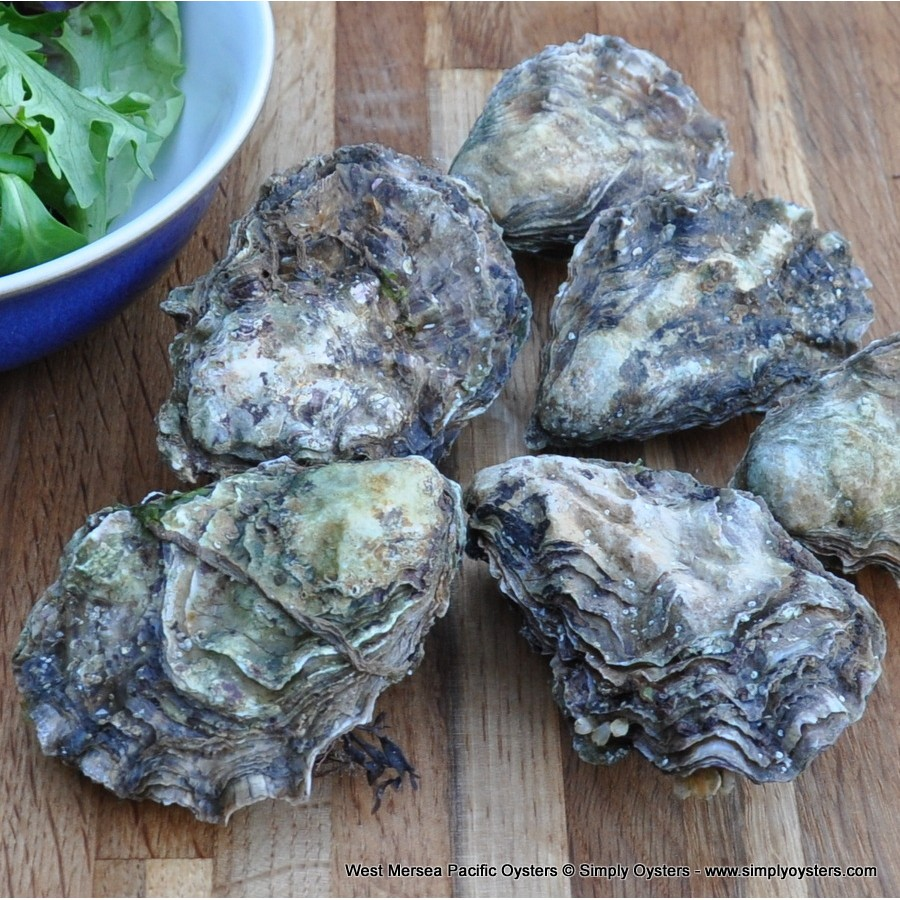 West Mersea Pacific Oysters (M-L)