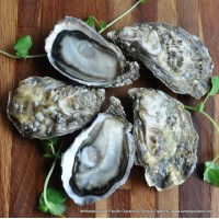 Whitstable Wild Pacific Oysters (M)