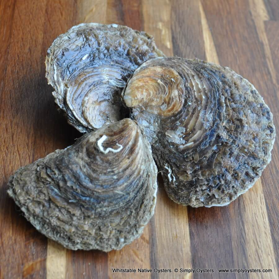 Whitstable Native Oysters (S-M)